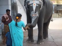 Une roupie contre une bénédiction, dans un temple d'Inde du Sud