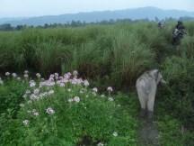 Un éléphanteau suit le convoi