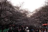 Picnics in Ueno park
