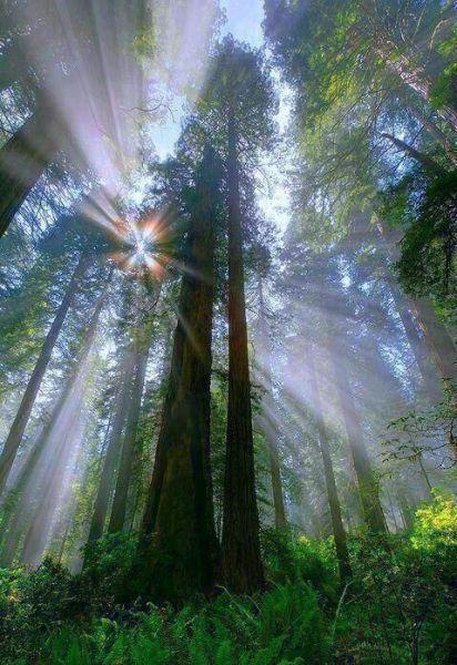 surprisinglives.net/photo-sunlit-forest/