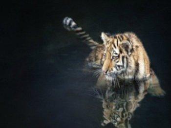 surprisinglives.net/water-cat/