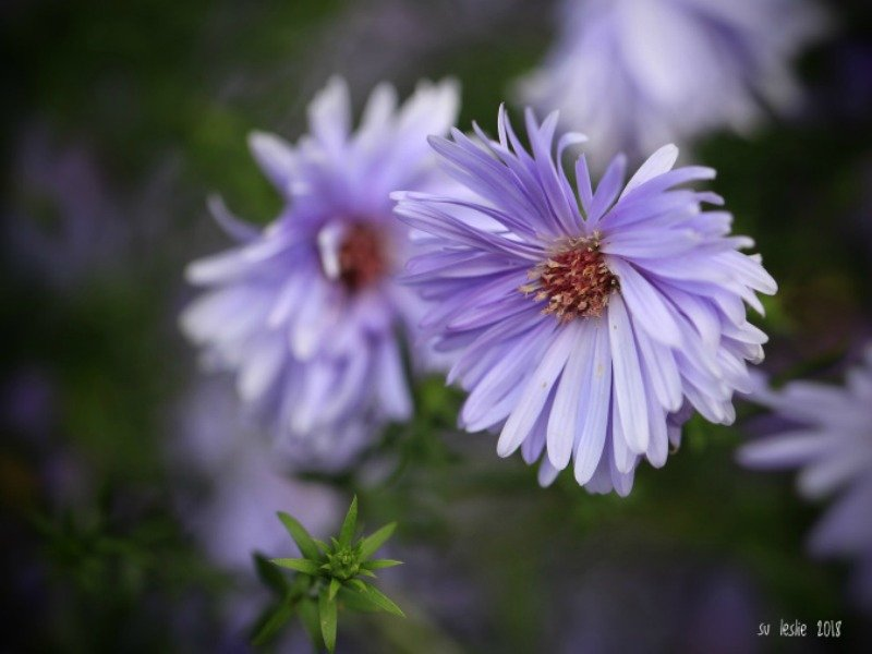 Magic Macro Flowers By Su Leslie.