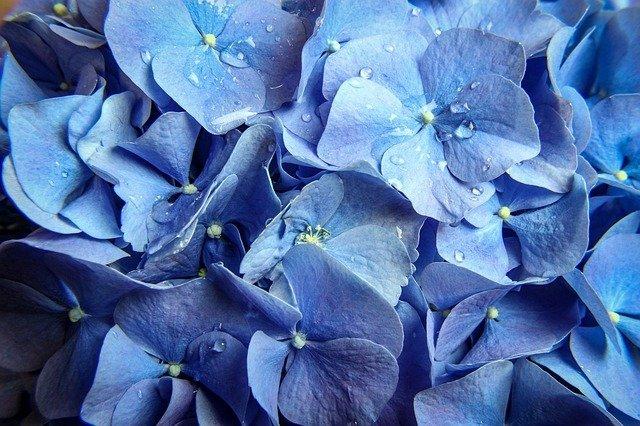 surprisinglives.net/nature-beautifully-blossoms-blue/