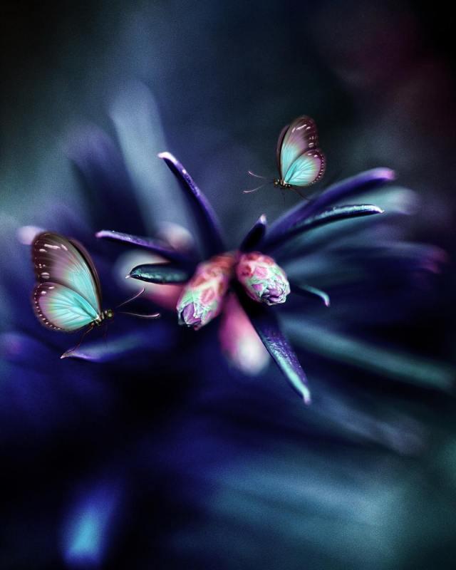 beautiful flowers instagram photoart by surprising lives