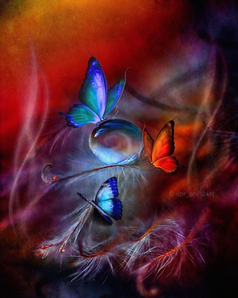 flowers and butterfly by surprising lives 3