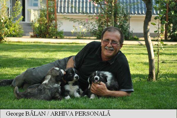 Ciobanescul carpatin si ciobanescul mioritic, primele rase romanesti de caini omologate international