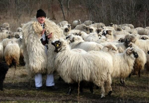 Ștefan Gros - cel mai batran angajat din Romania - are 99 de ani și are grijă de o turmă cu 2.000 de oi
