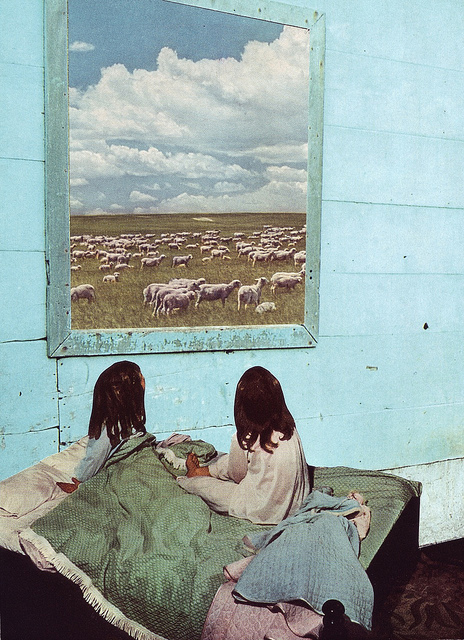 Count Sheep - by Beth Hoeckel