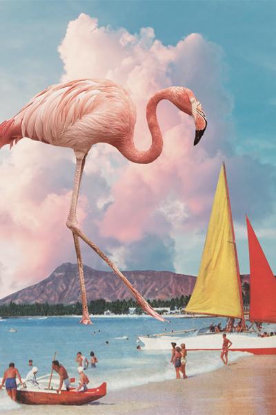 Karen Lynch - Flamingo Playground