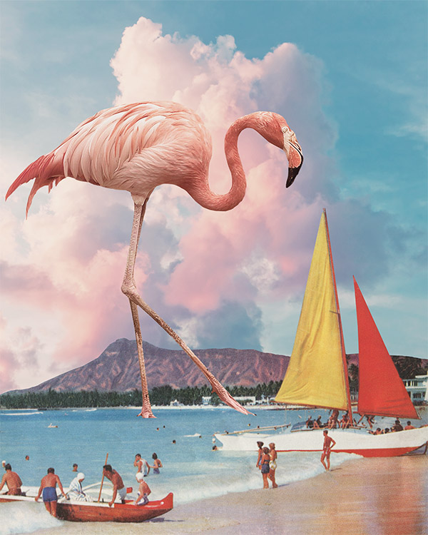 Karen Lynch - Flamingo Playground