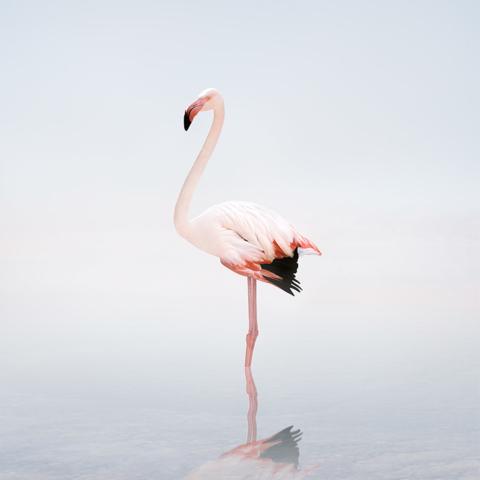 Alice Zilberberg - Meditations