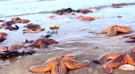 L'Histoire de l'Etoile de Mer – Un geste simple qui peut aider à changer le Monde
