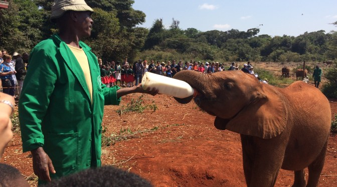 Visit to The David Sheldrick Elephant Orphanage in Nairobi, Kenya