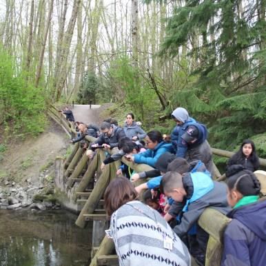 Releasing salmon back to Bear Creek