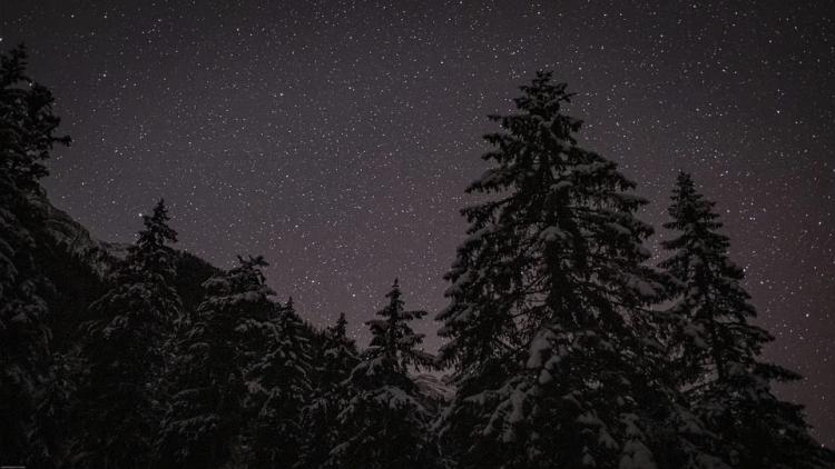 Übernachten im Winter im Wald Nacht Fichten