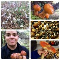 Going Mushroom Hunting at Fort Stevens State Park in Oregon