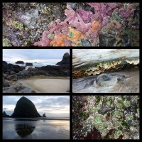 Beachcombing Around Cannon Beach Oregon and Haystack Rock