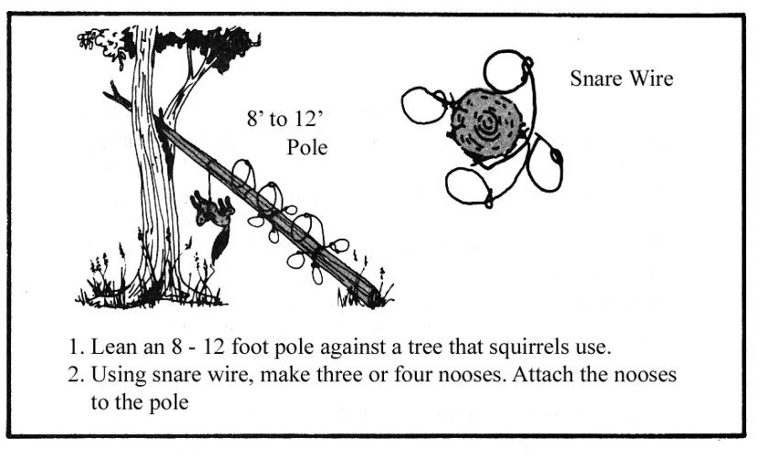 Squirrel Pole Snare Set - Survival Harvesting