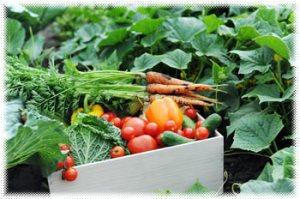 Survival Garden Seeds - survival seeds