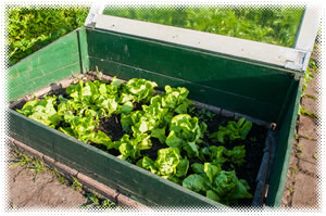 Survival Gardening: Extended Season and Cold Weather Tips
