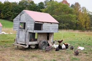 winterize your chicken coop