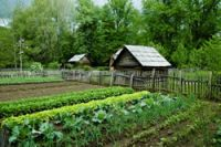 Survival garden for self sufficiency