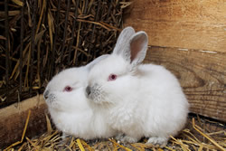 Raising Meat Rabbits – The Beginner's Guide to Raising Rabbits for Meat