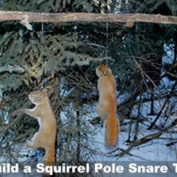 Build a Squirrel Pole Snare Trap in Three Easy Steps