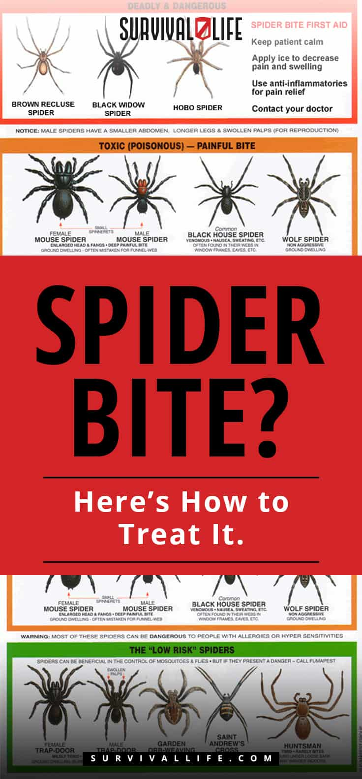 Spider Bite | Spider Bite? Here's How to Treat It.