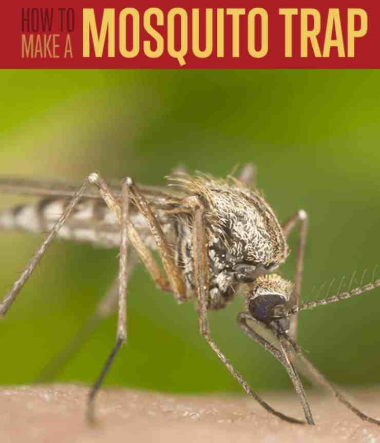 how to make a mosquito trap | Homemade Mosquito Trap Instructions | Summer-Ready Your Preps | homemade mosquito trap | homemade mosquito repellent for yard