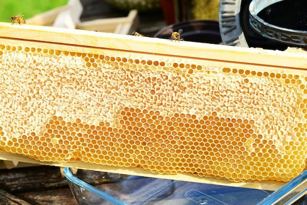 Comb Honey | The Benefits of Honey