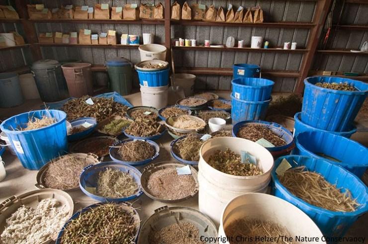 survival seeds storage