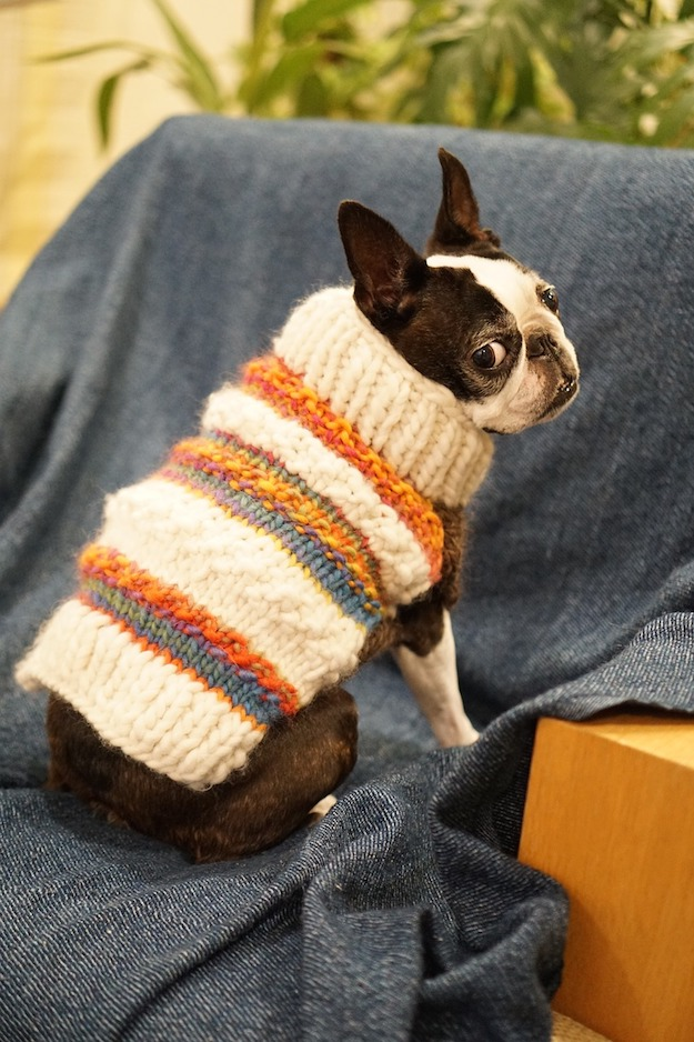 Keeping Your Pets Safe in the Winter