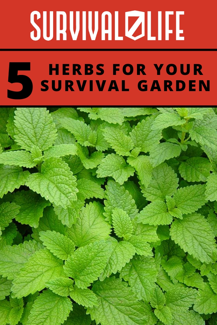 Check out 5 Herbs for Your Survival Garden at https://survivallife.com/5-herbs-for-your-survival-garden/