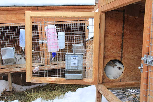entrance to rabbit hutch