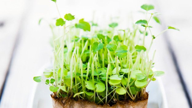 Grow delicate microgreens |10 Gardening Tips and Tricks That Everyone Should Know