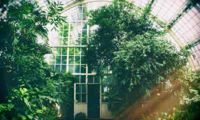 Feature | greenhouse trees | DIY Greenhouses | greenhouse design ideas