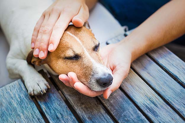 disaster related diseases in dogs