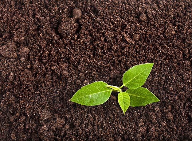 prep soil with epsom salt