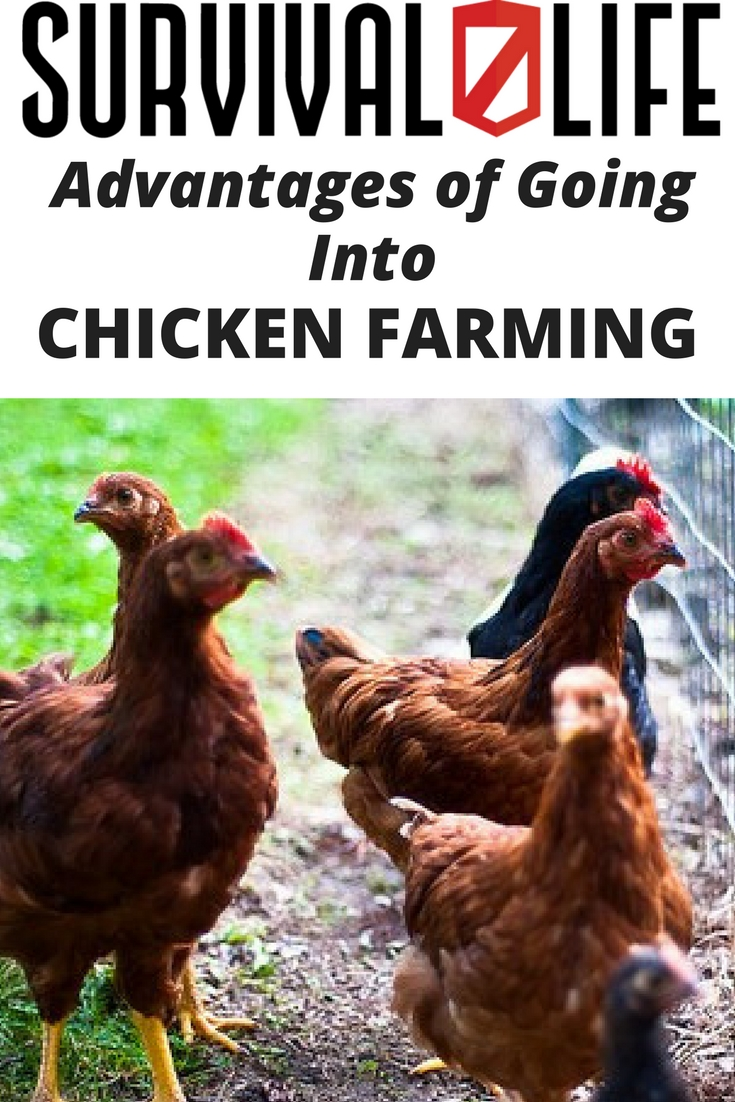Check out Advantages of Going into Chicken Farming at https://survivallife.com/what-advantages-chicken-farming/
