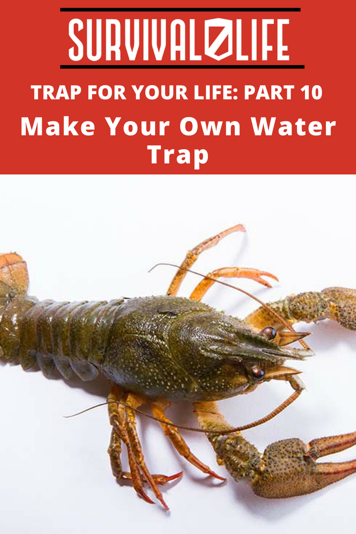 Check out Trap For Your Life: Part 10 | Make Your Own Water Trap at https://survivallife.com/make-own-water-trap/