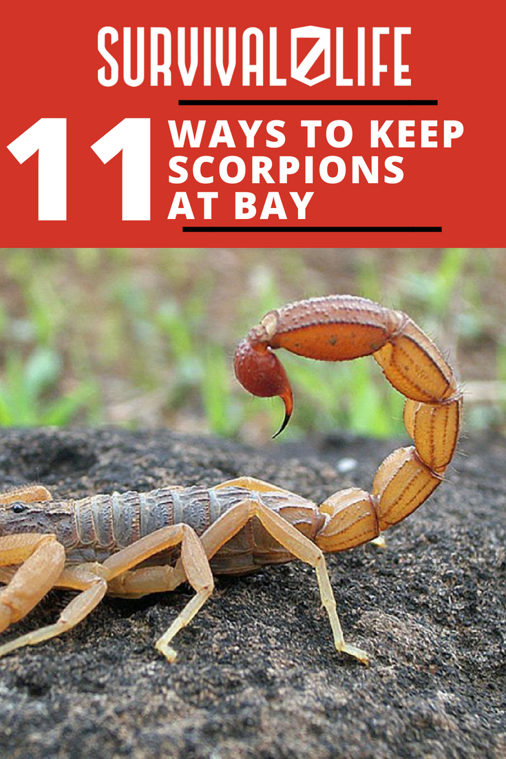 How To Get Rid Of Scorpions | Ways To Keep Scorpions At Bay | https://survivallife.com/get-rid-scorpions/