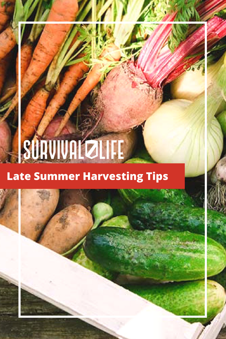 Check out Late Summer Harvesting Tips at https://survivallife.com/late-summer-harvesting-tips/