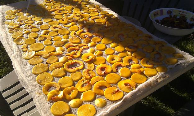 A DIY Solar Food Dryer | Summer Projects to Do Before It's Too Late