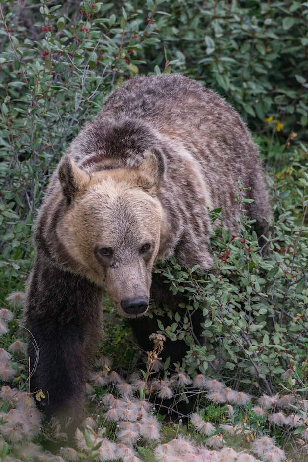 Tips On How To Survive In The Wild | Defending Against Animal Attack | Bears