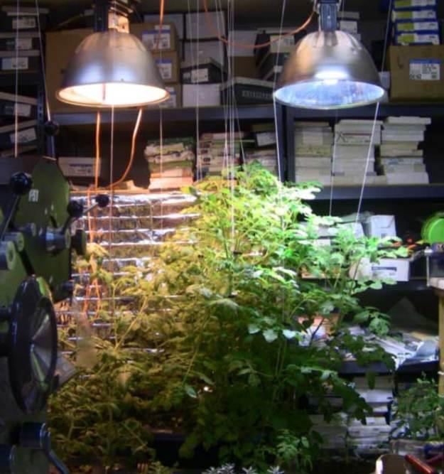 Indoor garden | Grow Your Garden All Year Long With An Indoor Garden