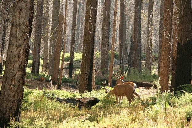 Deer Hunting in Arizona | Arizona Hunting Laws & Regulations
