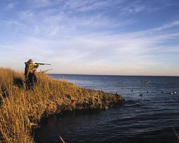 Duck Hunting Season | Colorado Hunting Laws And Regulations