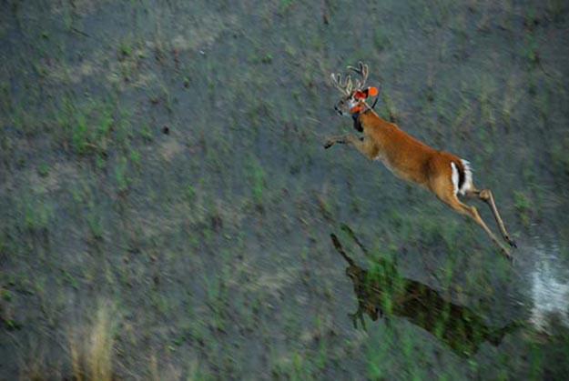 Deer Hunting In Florida   Florida Hunting Laws and Regulations