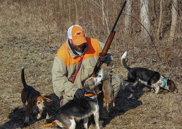 Don't Shoot Them | The Do's and Don'ts of Beagle Hunting